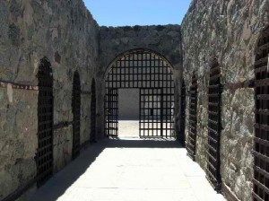 the-main-cell-area