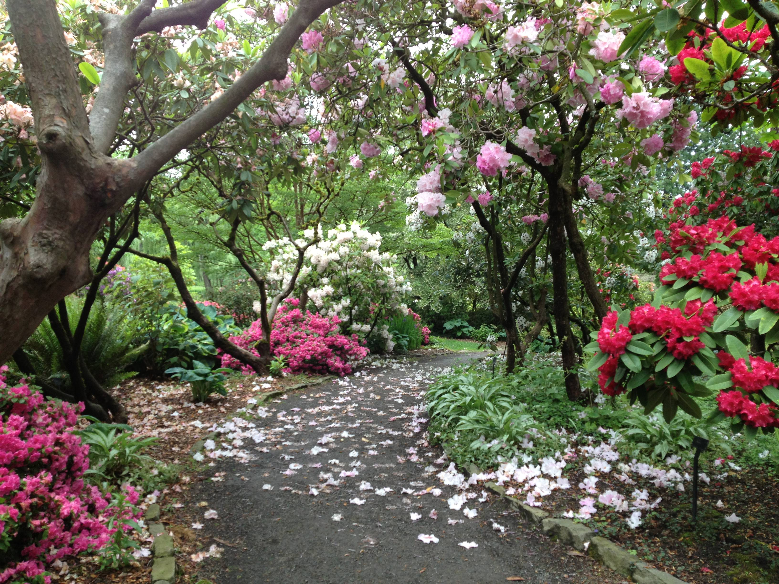 Portland oregon our great american adventure for Crystal springs rhododendron garden