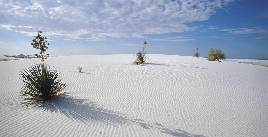 whitesands9